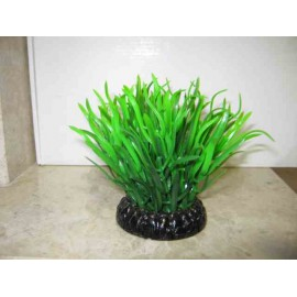 Planta BASE 7cm X 8 cm. SALVACRIAS